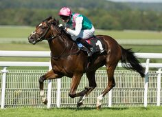 'TDN Rising Star' Seven Heavens (GB) (Frankel {GB}) will race once more this…