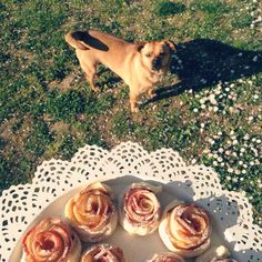 Dog, applerose, recipes, cake, rose