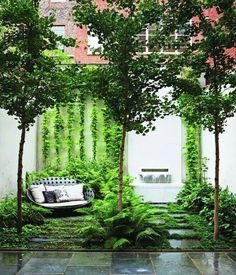 """Nice """"smallscape"""".....using the small trees define the space but allow see thru access.  The vines on the back wall create a interesting backdrop when contrasted against the blank wall."""