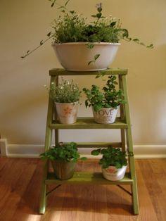Old ladder turned plant stand. Small Step Ladders, Small Ladder, Old Ladder, Vintage Ladder, Diy Vintage, Vintage Modern, Vintage Ideas, Indoor Garden, Indoor Plants