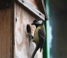Great tit on a nest box