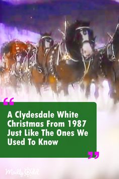 Budweiser Christmas Commercial 2019 Classic Budweiser Clydesdales Christmas Commercial | videos in