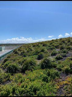 Fytogreen Australia | LinkedIn Roof Gardens, Australia, Activities, Mountains, Nature, Travel, Naturaleza, Viajes, Trips