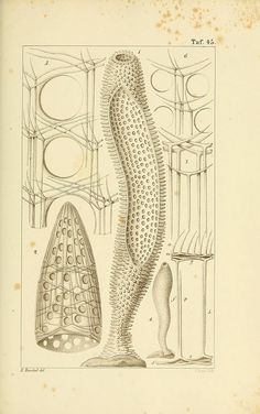 n192_w1150 by BioDivLibrary, via Flickr