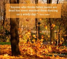 Anyone who thinks fallen leaves are dead has never watched them dancing on a windy day. Season Quotes, Nature Quotes, Fall Quotes, Time Quotes, Wisdom Quotes, Happiness Quotes, Quotes Quotes, Autumn Scenes, Welcome Fall
