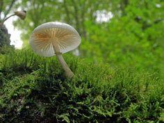 Surgen perlas desde la esmeralda perpetua del musgo, sobre el tronco rendido del gigante que cayó. Aparecen tesoros y desaparecen, porque los tesoros del bosque son efímeros, pero irrevocables.