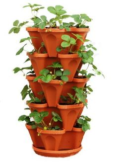 Mr Stacky 5 Tiered Hanging and Stacking Indoor Outdoor Vertical Strawberry Planter - Learn How to Grow Organic Strawberries Easy with These Terra Cotta Plastic Containers - Great Garden Planting Pots - Planters Also Used for Herbs Peppers Flowers Tomatoes Succulents Green Beans - Free Growing Gardening Plant Tips by Mr. Stacky, http://www.amazon.com/dp/B00A3HFNNE/ref=cm_sw_r_pi_dp_3p5yrb1740XCC