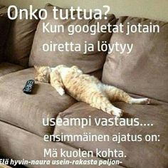 Aiheeseen liittyvä kuva Nice Picture, Good To Know, Finland, Funny Things, Cool Pictures, Jokes, My Love, Ha Ha, Chistes