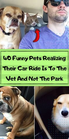 Dogs need to go to the vet, it's a fact. As much as we hate taking them, we can still enjoy the little things that come along with it. #awesome #amazing #facts #funny #humor #interesting #trending #viral #news #entertainment #memes #facts Animals And Pets, Funny Animals, Cute Animals, Funny Humor, Funny Dogs, Girl Photography Poses, Amazing Facts, Whippet, Nature Wallpaper