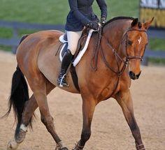Types Of Horses, English Riding, Dream Barn, Hunter Jumper, Donkeys, Equestrian Style, Horse Stuff, Show Horses, Zebras