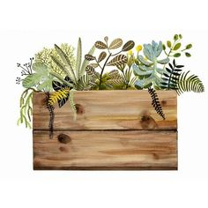 Watercolor painting- print- Crate and Plants Print, botanical, wood,... ❤ liked on Polyvore featuring home, home decor, wall art, plants, wood home decor, watercolor painting, watercolor wall art, wooden wall art and wood crates