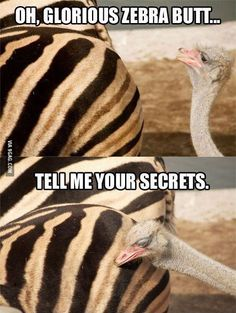 Oh glorious Zebra Butt Tell me your secrets