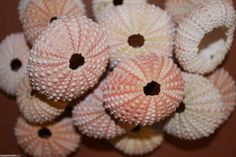 160 pcs) Pink Sea Urchins for sea urchin ornament projects, free shipping, diy urchin ornament, Chirstmas seashell ornament crafts, pink by runningtide. Explore more products on http://runningtide.etsy.com