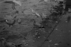 """35mm film photography black and white -A 400iso, 35mm, Black and White Film piece.  Caught this image on Skerries Harbor in Co. Dublin. The Seagulls were going crazy when the fishermen came back to dock.  Shot, developed and printed by myself.    Link is to my Photography account <3 Jump over and leave a """"📌"""" if you're from here! 💖 Color Photography, Film Photography, Digital Photography, 35mm Film, Going Crazy, Black And White Photography, Dublin, Printed, Link"""