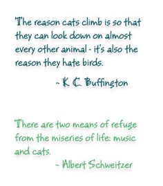 fantastic quotes about cats