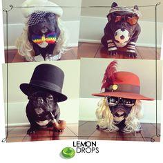 Mais uma fofura pra alegrar nossos dias   Essa é a Trotter, uma bulldog francesa que vem fazendo sucesso no Instagram com seus looks do dia!  É impossível não sorrir!  Siga ela no instragram: http://instagram.com/trotterpup