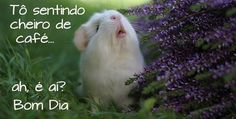 Human Babies, Guinea Pigs, Rabbit, Cute Animals, Boutique, Google, Buen Dia, Nighty Night, Good Thoughts