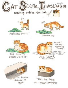 Brace Yourself: Pictures of a Scottish Fold as Anime, Disney, and Sherlock Holmes Characters Funny Cats, Funny Animals, Cute Animals, Crazy Cat Lady, Crazy Cats, I Love Cats, Cool Cats, Gato Animal, Cat Comics