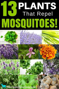 Plants That Repel Mosquitoes! 13 Plants That Repel Mosquitoes! Plant these 13 plants in your yard and garden to repel insects! Gardening tips, herbs in the gardens, flower garden Plants That Repel Mosquitoes! Plant these 13 plants in your yard and Gardening For Beginners, Gardening Tips, Gardening Courses, Texas Gardening, Gardening Services, Gardening Gloves, Gardening Supplies, Amazing Gardens, Beautiful Gardens