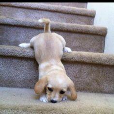 Slinky dog! AWWWWW