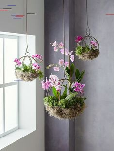 hanging plants indoor Houseplants bring a refreshing touch of nature inside. To eliminate crowded shelves and tabletops, try hanging your houseplants. These indoor hanging plants Hanging Orchid, Orchid Planters, Succulent Planters, Succulents Garden, Garden Plants, Planter Pots, Decoration Plante, Growing Orchids, Plant Shelves