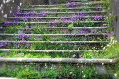 Magical steps
