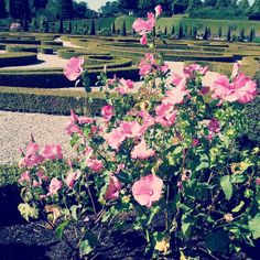 dianahvims #frederiksborgslot #frederiksborg #Hillerød #garden #nature #flowers #friend