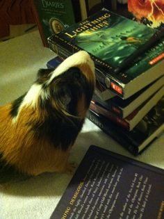 The part where he turned into a guinea pig was probably one of my favorite book scenes ever. I laughed for like 30 minutes