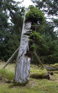 Famous Skedans totem, propped up for now but soon to fall and return to earth