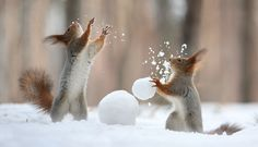 Squirrels have never looked cuter, and photographer Vadim Trunov captured them in an amazing environment and light, showing their beautiful playful
