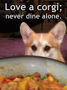 Love a corgi; never dine alone. | Cute Pembroke Welsh Corgi Hummer, offering to help with the dishes.