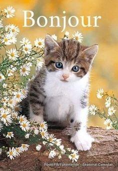 Pretty Cats, Beautiful Cats, Animals Beautiful, Cute Baby Animals, Animals And Pets, Cute Cats And Kittens, Tabby Kittens, Cat Flowers, Kinds Of Cats