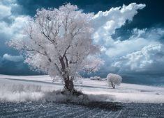 La Beauté majestueuse des Arbres en Pologne capturée par la Photographie infrarouge (4)