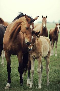 Horses are one of the animals closest to us. We have selected for you the best horses. We share with you the best horses photos in this photo gallery. Cute Horses, Horse Love, Horse Girl, Beautiful Creatures, Animals Beautiful, Most Beautiful Horses, Beautiful Horse Pictures, Pretty Animals, Beautiful Babies