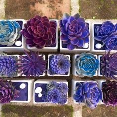 I have succulents at home, but had I know there are purple ones! So pretty.