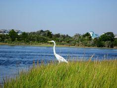 Birds Eye View in Surf City, NC