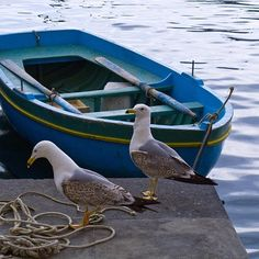 Seagulls. Aegean islands, Greece. - Selected by www.oiamansion.com in Santorini.