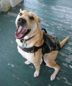 Mochila de senderismo para perros | Cuidar de tu mascota es facilisimo.com