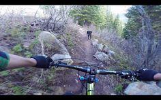 Video: Tucker the Dog VS Jeff the Bike Rider | Singletracks Mountain Bike News
