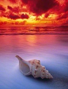 Shell Sunrise --- Peter Lik has been shooting expansive scenes of Mother Nature his whole life. Born in Melbourne, Australia to hardworking Czech immigrants, he never took the gift of life's beauty for granted. Beautiful Sunset, Beautiful Beaches, Beautiful World, Pretty Pictures, Cool Photos, Belleza Natural, Beautiful Places To Visit, Ocean Beach, Beach Sunrise