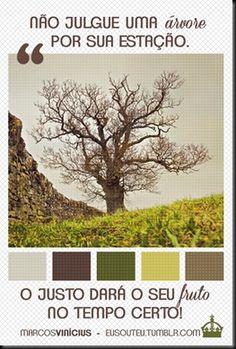 koynonia koynonia: A árvore e o cristão... uma analogia.