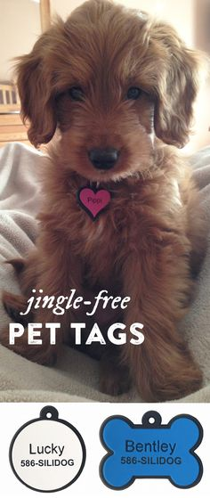 No more noise from jingling metal or plastic dog tags. These silicone dog tags are flexible, durable, fade-proof, and silent. Dog Tags For Dogs, Cute Dog Tags, Pet Tags, Marken Taschen, Cute Puppies, Cute Dogs, I Love Dogs, Dogs And Puppies, Doggies