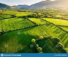 Song Thrush, Weaving Wall Hanging, Green Fields, Aerial View, Countryside, Lush, Dawn, Ireland, Stock Photos