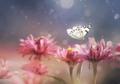 Dreamlike Photographs of Insects Found in a Garden        Michael Zhang · Feb 06, 2012         Malaysian photographer Peiling Lee captures beautiful, dreamlike macro photographs of tiny critters she finds in her garden.