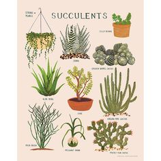 11x14 print of various succulent plants Printed on soft white, 25% cotton paper Illustrated in gouache by Keiko Brodeur Printed in the USA
