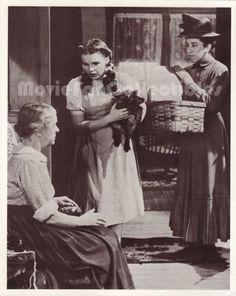 The Wizard of Oz 8x10 Movie Photo Card Margaret Hamilton, Judy Garland