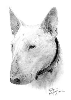 English Bull Terrier dog pencil drawing thumbnail