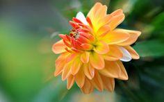 Flores lindas del mundo