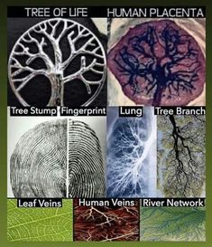 Tree of life! So cool 👍 Wow Facts, Wtf Fun Facts, Wiccan, Witchcraft, Magick, Human Placenta, La Ilaha Illallah, Spirit Science, A Silent Voice