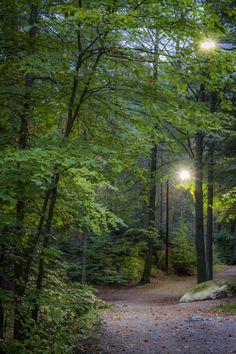 The paths in Fredrikstadmarka, Norway Copyright: Heidi Femmen